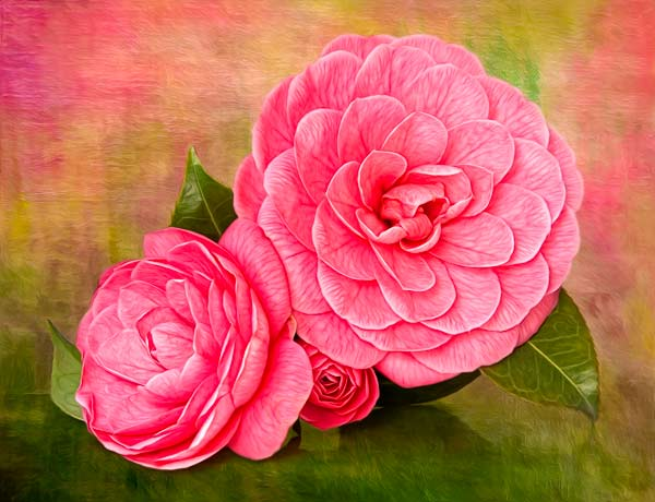 Final Camellia Image