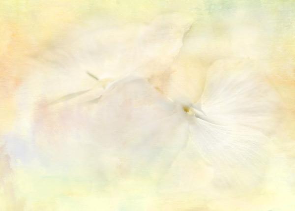 Clouds of Petals