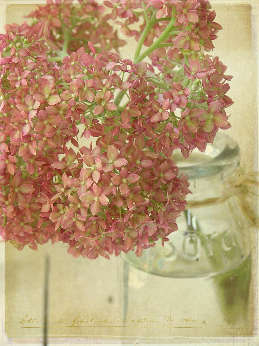 Flower in jar