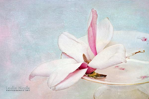 Final Magnolia image