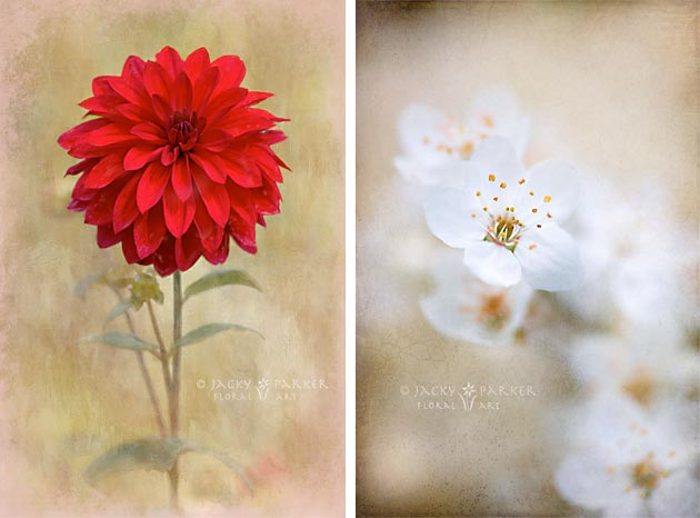 2 Flower images