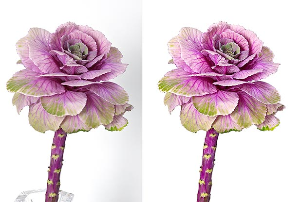 Before and After Photoshop Editing