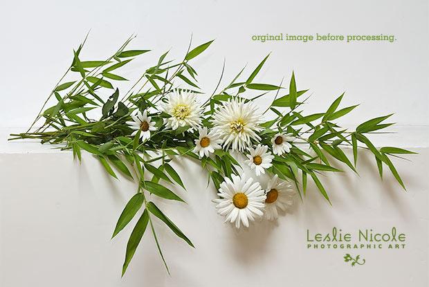 original bamboo, daisies and dahlias photograph