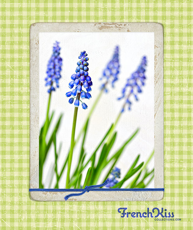 Muscari Framed