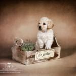 Puppy Jardin