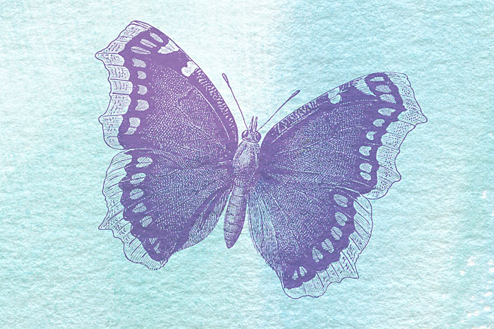 Butterfly Photoshop brush