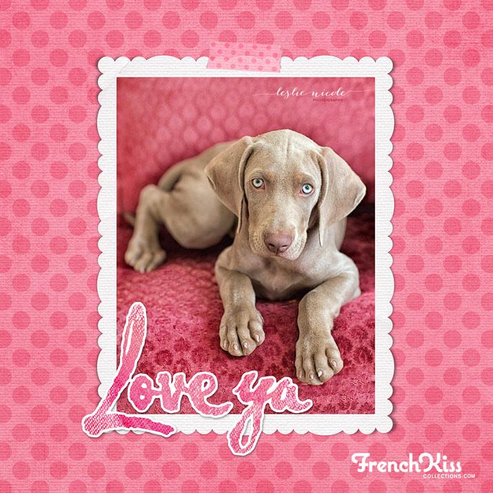 Weimaraner pup Valentine