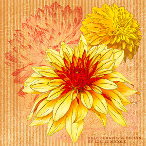 Design Using Dahlia Illustrations from Photographs