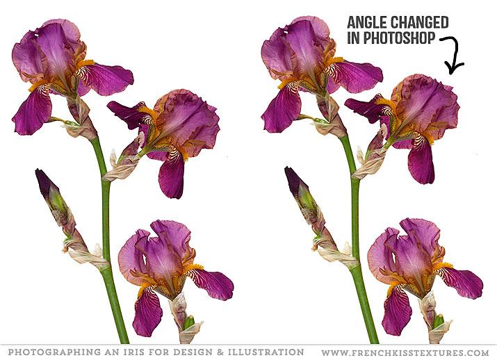 Iris flower edited in Photoshop.